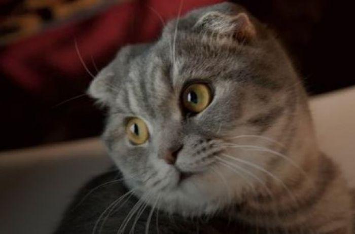 Кот стал звездой Сети, решив принять ванну с пеной. ВИДЕО