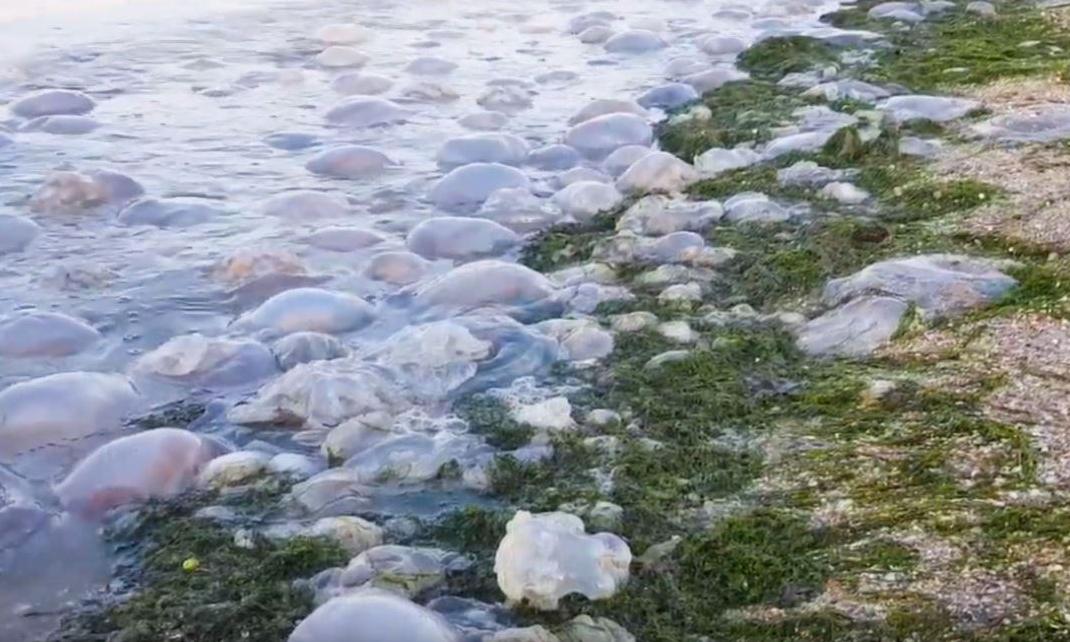 Новая экологическая катастрофа: что сотворили оккупанты с Крымом на этот раз. ФОТО