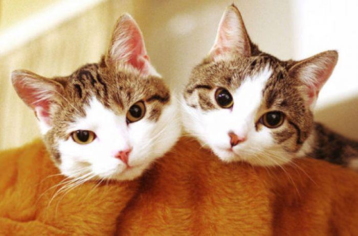 Вот почему кошки откликаются именно на «кис-кис»