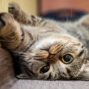 Как узнать возраст кошки: 4 главных признака