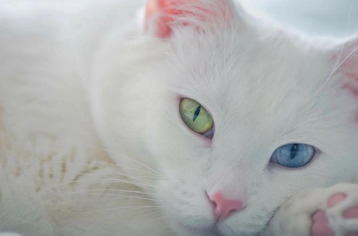 Пять мифов о кошках, в которые до сих пор многие верят