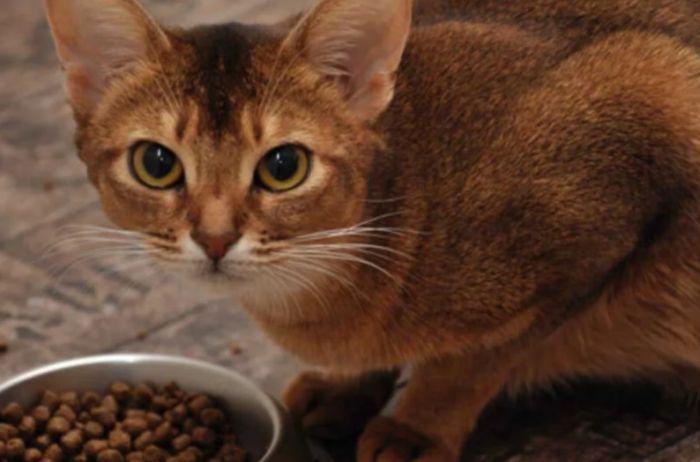 Чем категорически нельзя кормить кошек