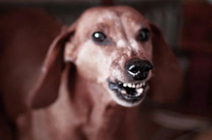 Названы три причины, по которым собака может укусить