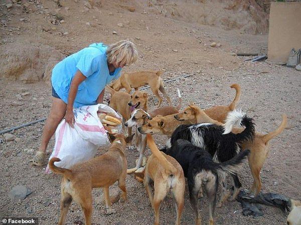 61-летнюю женщину загрызли насмерть бездомные собаки, которых она кормила. ФОТО