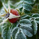 Украину накроют заморозки: синоптик огорчил прогнозом на Пасху