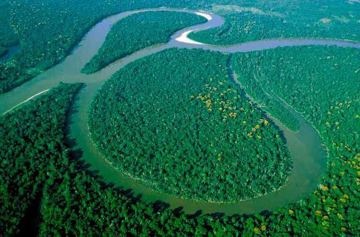«Биоразнообразная» пандемия: эколог заявил об угрозе распространения нового опасного вируса