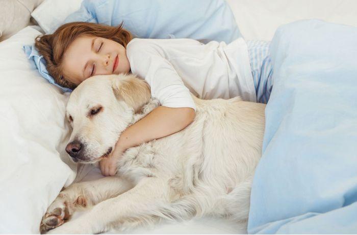 Три причины позволить собаке спать вместе с вами