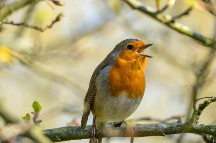 Птичий язык: понимают ли пернатые друг друга