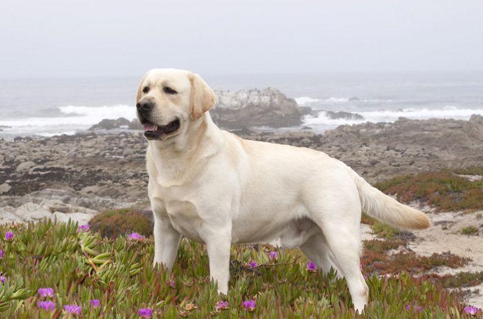 Названы самые добрые породы собак