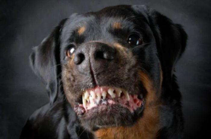 Как защититься, если напала агрессивная собака-одиночка
