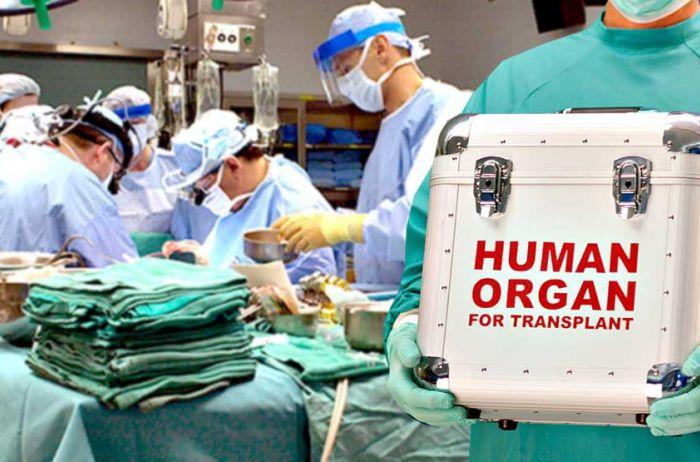 Кабмин утвердил тарифы на трансплантацию органов: суммы поражают