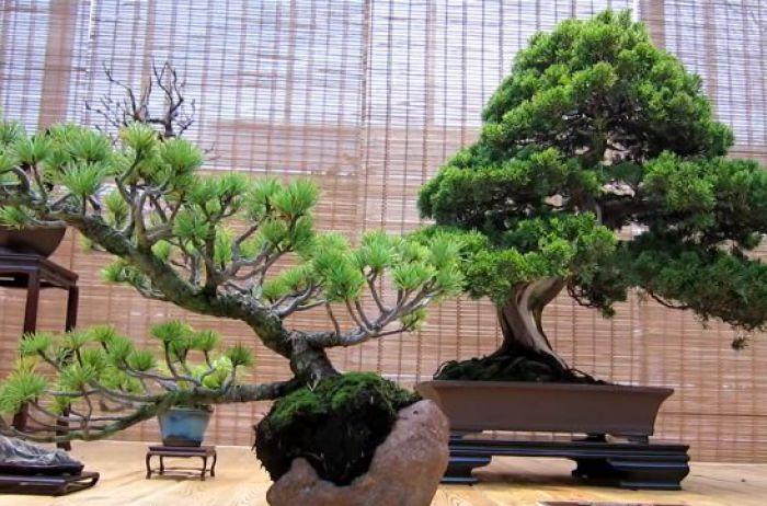 Скорпионам – кактус, Рыбам – орхидеи: какие растения нужны для счастья знакам Зодиака