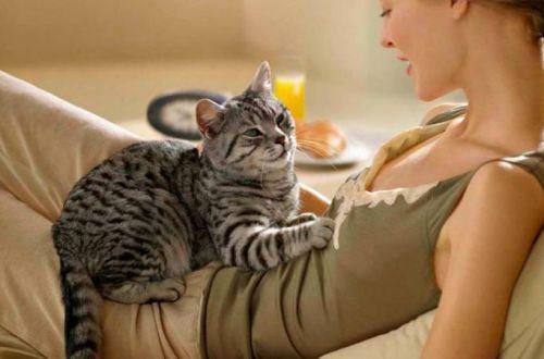 Вот почему кошки мнут лапками человека, прежде чем лечь на него