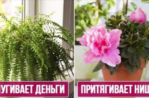 Прогонят деньги и пригласят нищету: каких цветов не должно быть в доме
