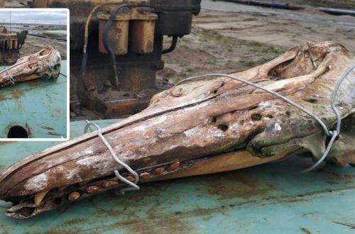 Мужчина вытащил из моря череп доисторического монстра
