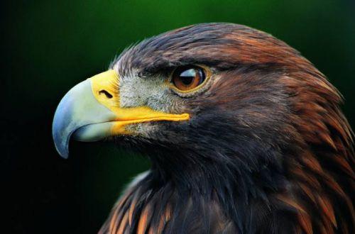 Толкование примет: что произойдет, если покормить птиц хлебом