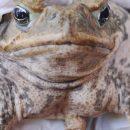 Лягушка и лук: странные тесты на беременность из далёкого прошлого