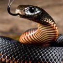 Толкование сновидений: к чему снятся змеи
