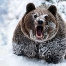 На горнолыжном спуске в Карпатах медведь погнался за лыжником. ВИДЕО