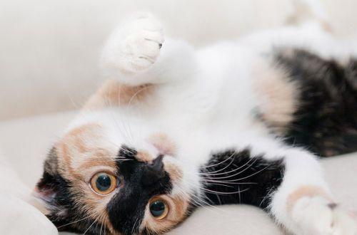 Медики объяснили, почему нельзя спать с кошкой в постели