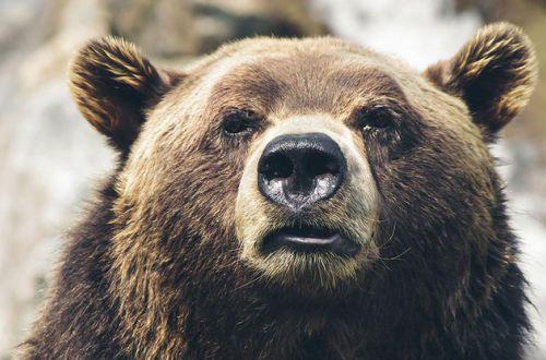 В Румынии лыжнику удалось спасти людей от медведя. ВИДЕО