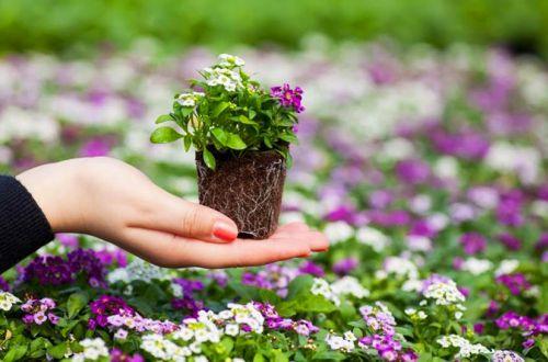 Какие цветы необходимо сеять на рассаду уже в марте