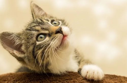 Забавное ВИДЕО с котом-массажистом стало вирусным