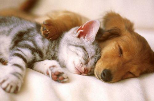 Стало известно, каких кошек и собак нельзя вакцинировать от COVID