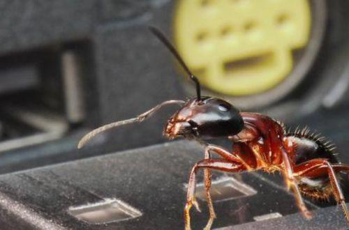 Компьютер американца атаковали муравьи. ВИДЕО