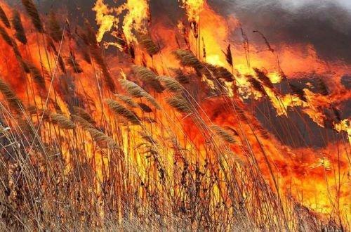 В Украине ужесточили штрафы за создание пожарной ситуации