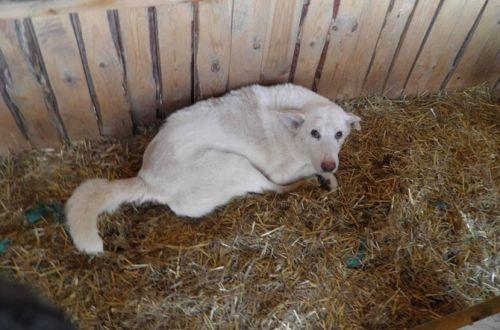 Издевался и почти не кормил: у киевлянина забрали девять собак