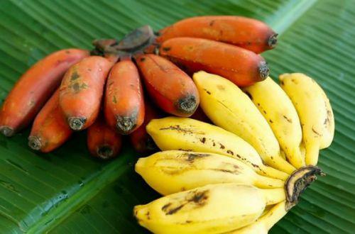 Ученые объяснили, какими бананами нельзя кормить детей