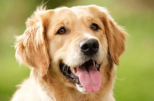 Собака, издающая забавные звуки при виде хозяина, стала новой звездой Сети