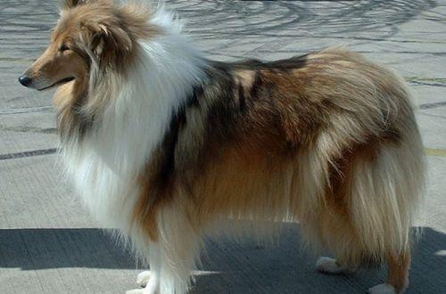 Учеными составлен рейтинг самых агрессивных собак