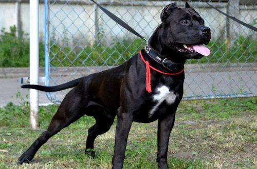 Названы породы собак с самым непредсказуемым поведением