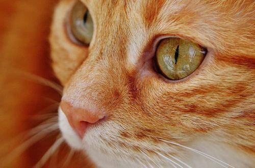"""Кот спас жизнь хозяйке, """"диагностировав"""" у неё проблемы со здоровьем"""