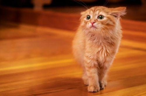 Чего больше всего боятся кошки – объяснение фелинолога