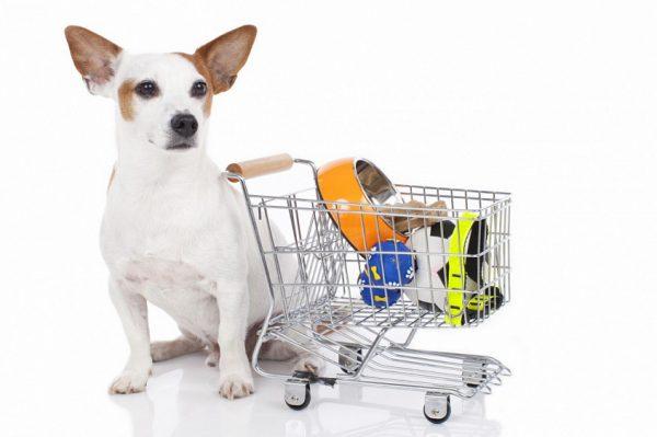 Большой выбор товаров для животных в зоомагазине «ZooRoom»