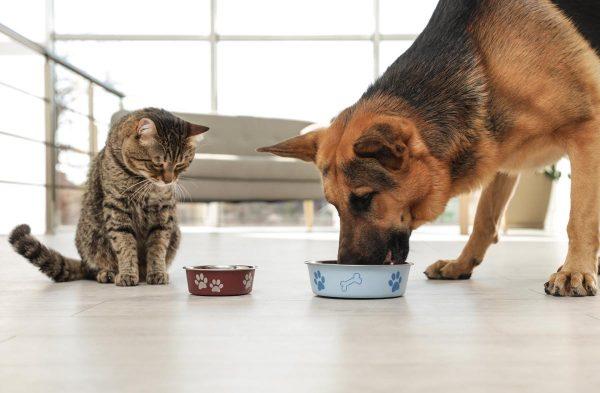 Качественный сухой корм для собак по выгодным ценам