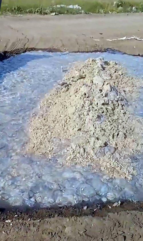 Уборка медуз с пляжа