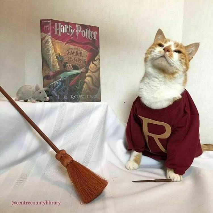 Кот прославил библиотеку и увеличил ее посещаемость: секрет менеджмента. ФОТО